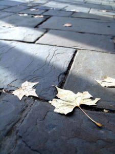 leaf on street